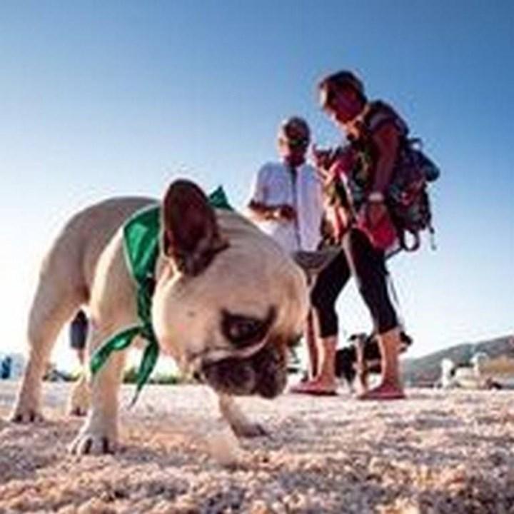 Dog beaches 11